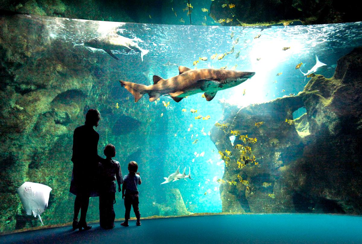 l aquarium de cin 233 aqua le rendez vous du mathurin