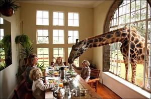 GiraffeManor1