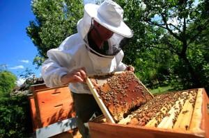 apiculture jardin paris
